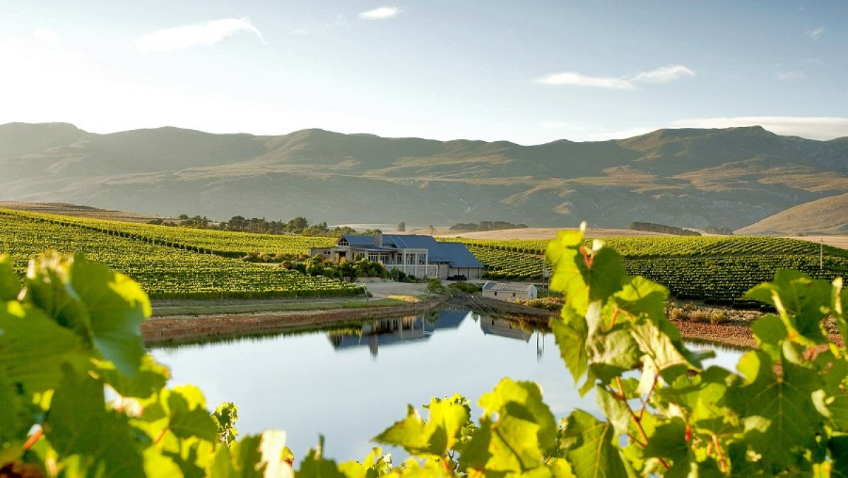 A wine-lover's guide to the Overberg